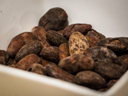 cacao-durand