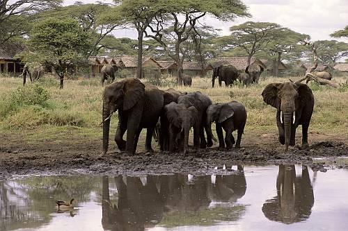 Voyage de noce Safari