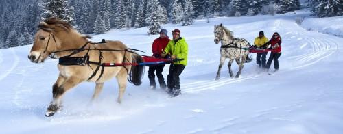 ski-joeering