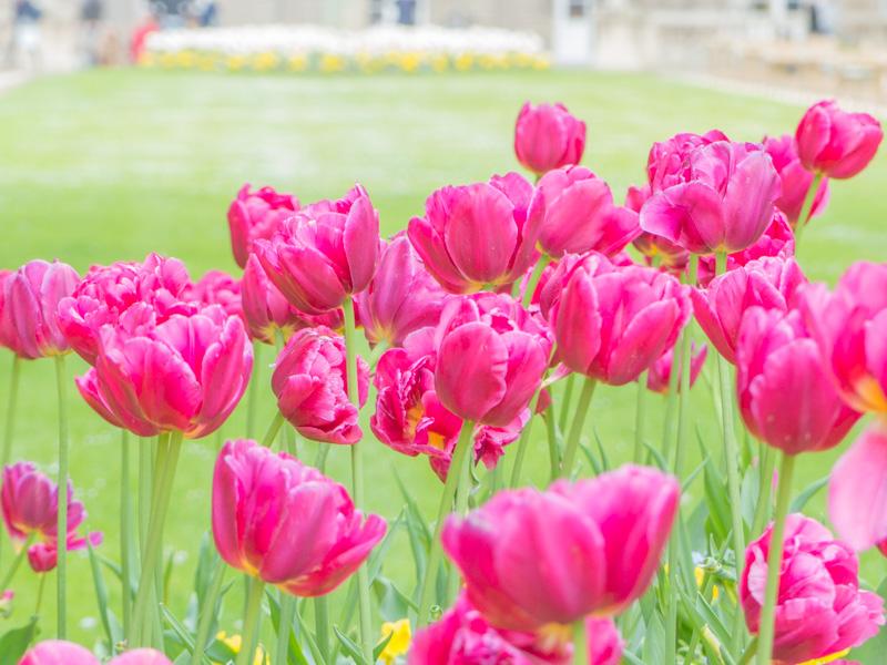 photo-jardin-luxembourg-fleur