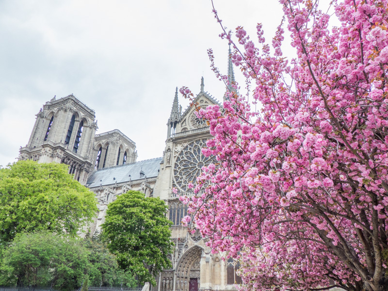 Notre-Dame-de-Paris vue de coté, sur l'ïle de la cité