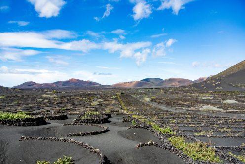 Pieds de vigne au pied du volcan Teide