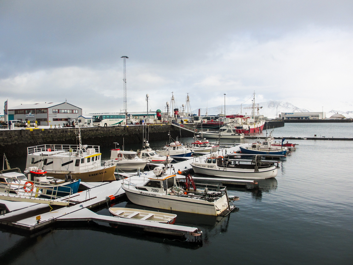 port-reykjavik