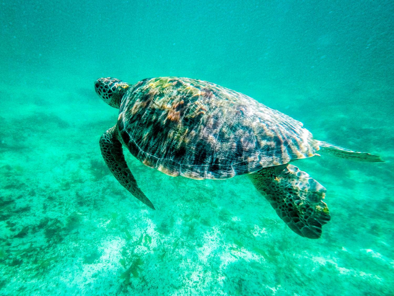 15 photos qui vont vous donner envie de foncer en Guadeloupe