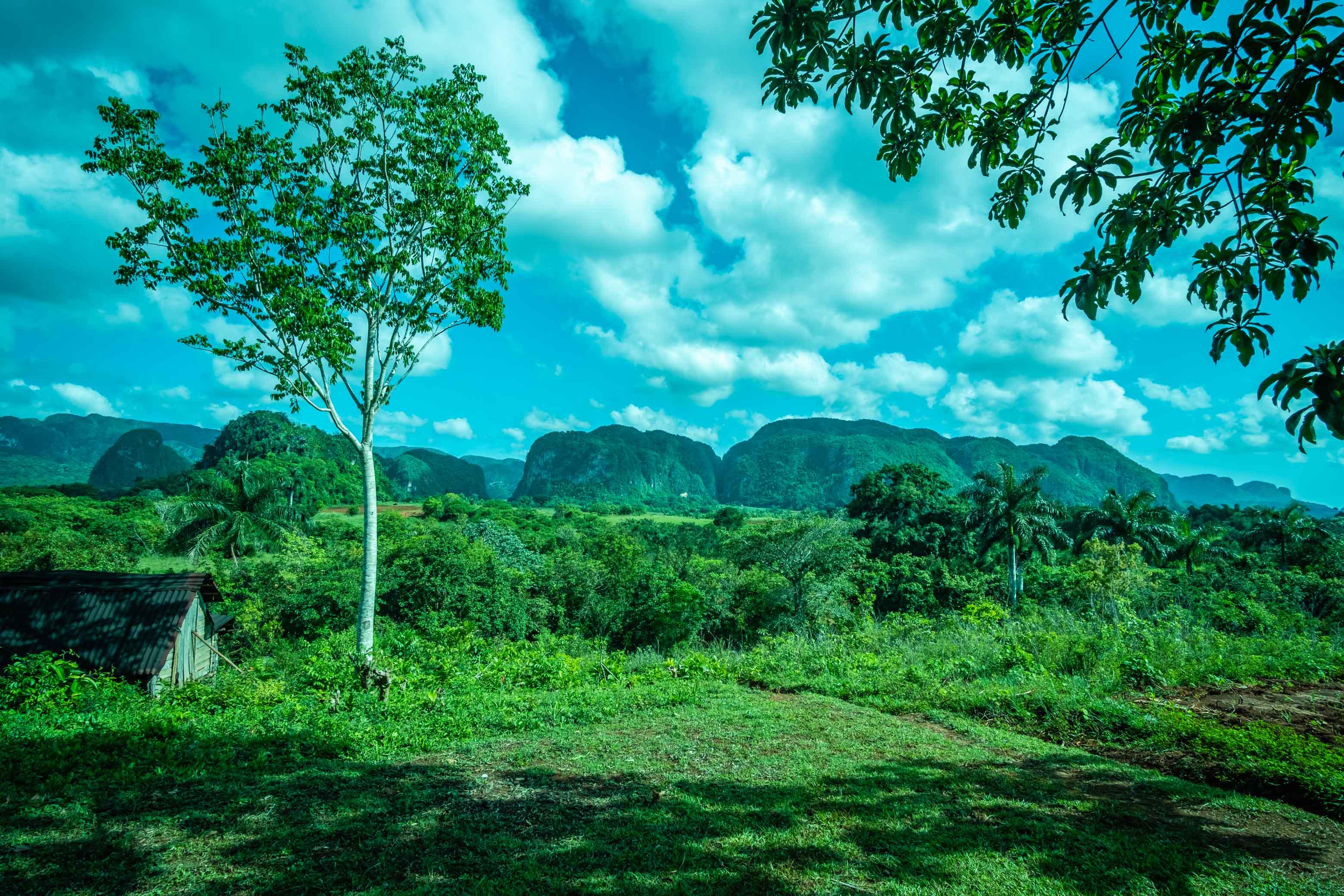 Vue sur les mogotes depuis une plantation de tabac