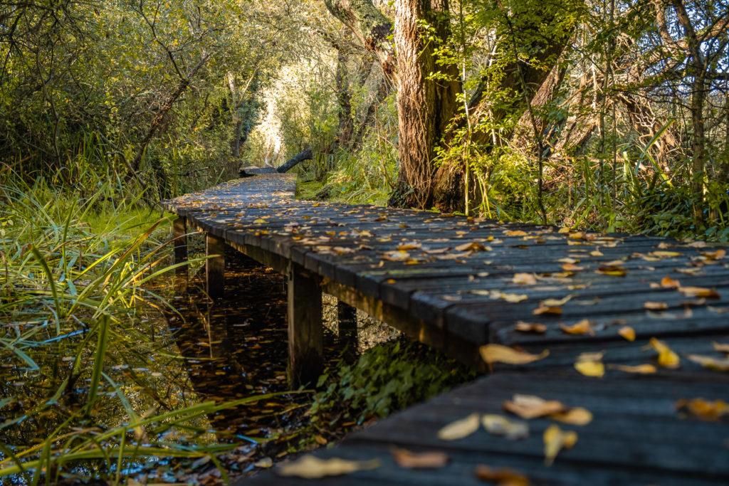 Chemin marais du Quellen